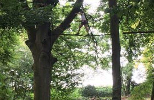 parcours accrobranche arbres