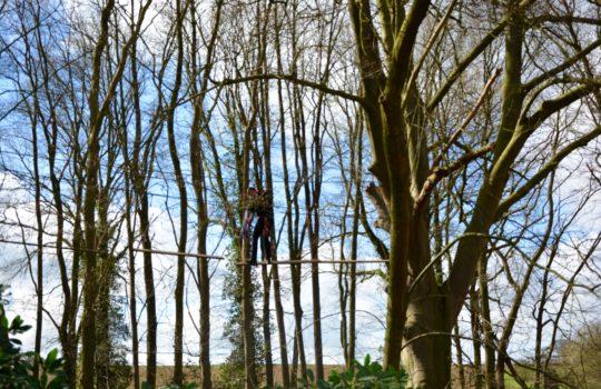 accrobranche arbres