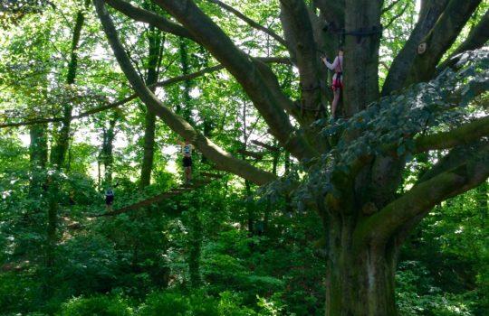 pont de singe arbre accrobranche