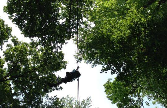 death ride accrobranche forêt