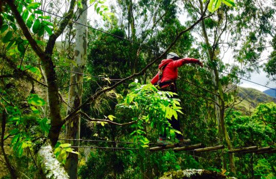 parcours accrobranche arbres audace