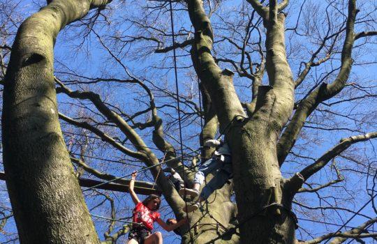 arbre parcours d'audace aventure nature