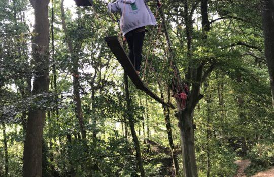 Pont cordes arbres parcours d'audace