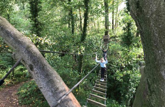 pont de singe pont himalayen arbres