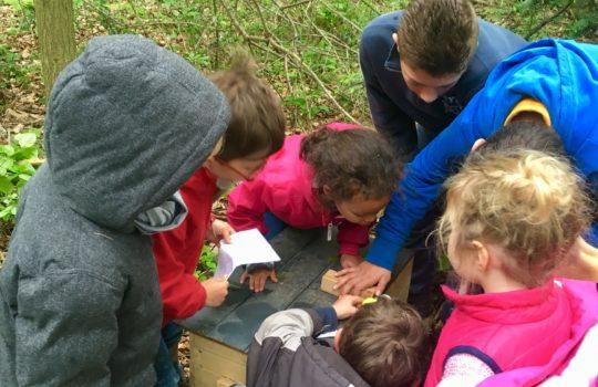 enfants animation coffre au trésor bois nature
