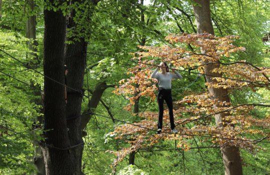 Pont de singe arbres accrobranche parc
